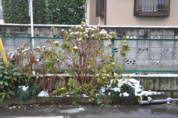 11月に雪が降るなんて関東では本当にびっくり