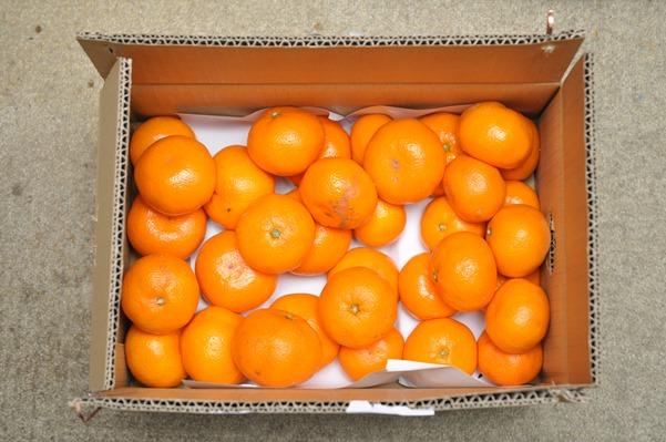 和歌山みかんの久幸園の清見オレンジをamazonで買う